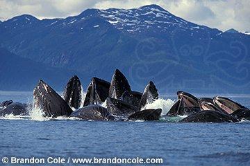 Balenat kurrizo