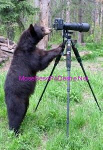Ariu fotograf
