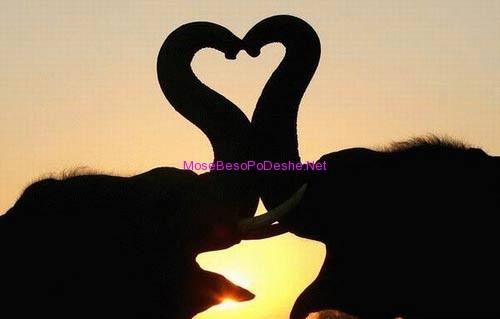Elefantet e dashuruar