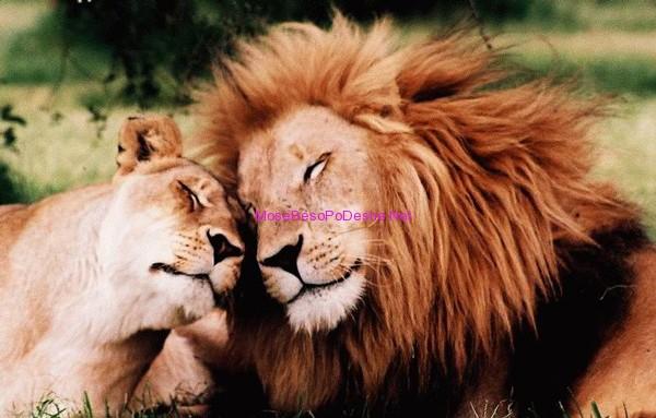 Luan te dashuruar