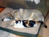 Qeni Buster dhe macja Katty