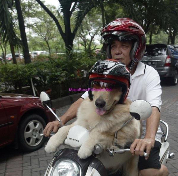Qeni Motoriste