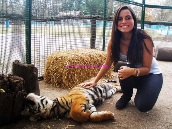 gruaja me tigrin