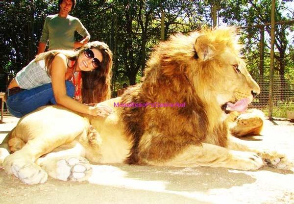 njeriu dhe luanin