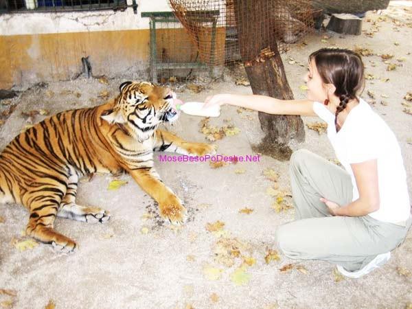 tigri dhe njeriu