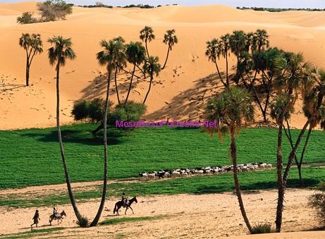 Kuriozitet per shkretetiren e Saharase