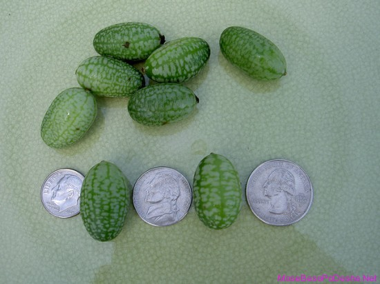 Smallest Watermelons 4
