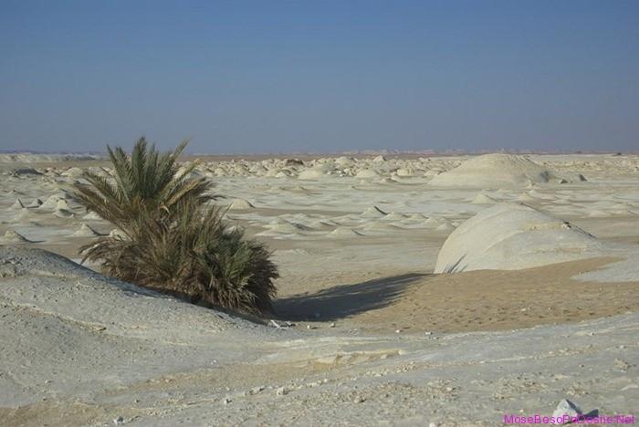 Shkretetira e bardhe e Egjiptit