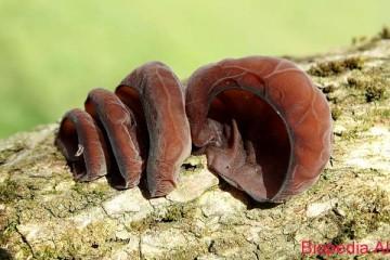 Informacion-per-kerpudhat-Kerpudha-veshi-i-Judes-2