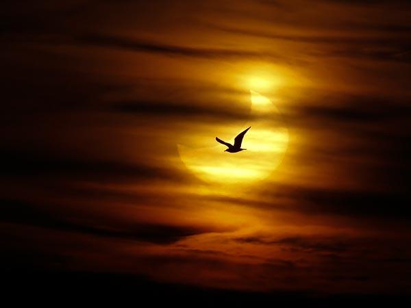 Si ndodh eklipsi i diellit